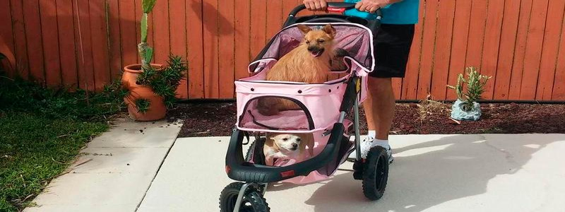 The 5 Best Pet Strollers of 2018 [Reviewed]