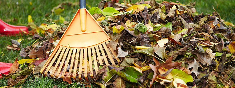 The 10 Best Thatching Rakes – [Reviews & Rankings]