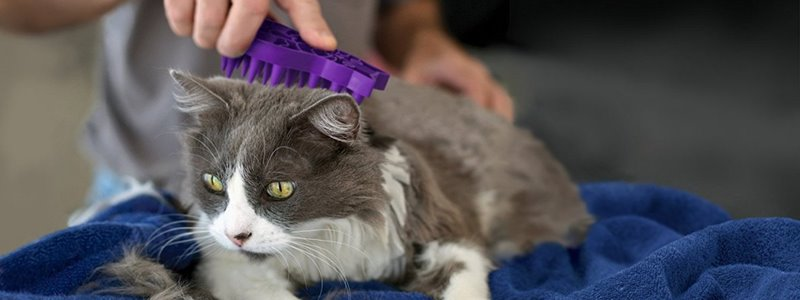 The Best Dematting Tool For Cats – Top 5 Models [Reviewed]