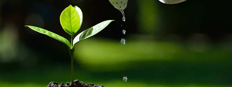 Why Do Plants Need Water?
