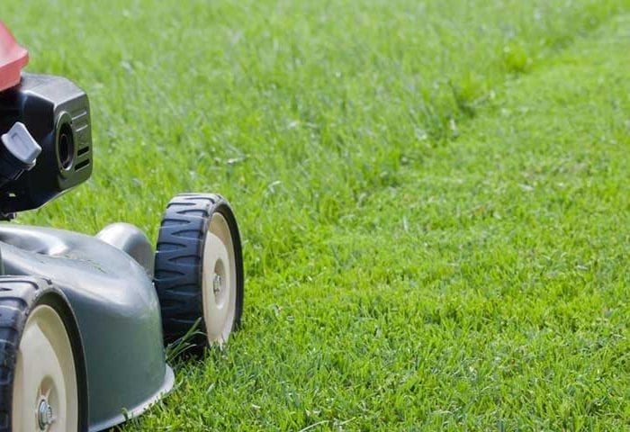 10 Things to Consider Before Mowing Your Lawn