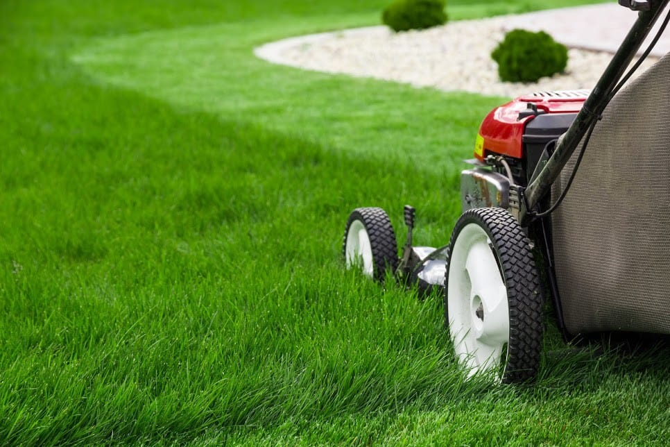 before mowing your lawn